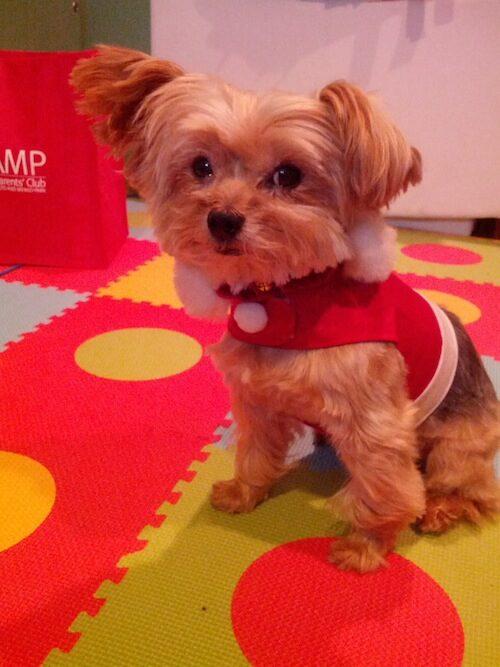 America's Next Top Doggie Model Zeus