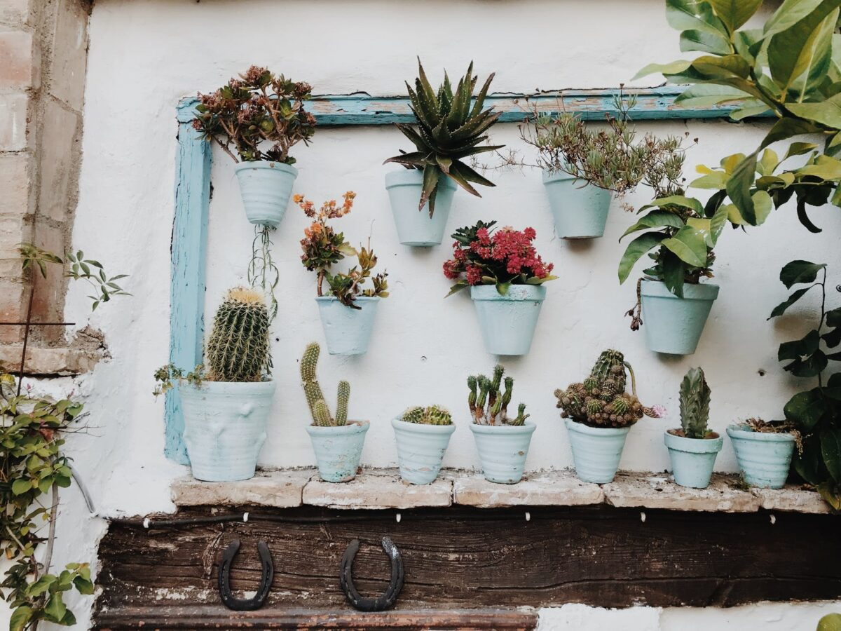 plants in pot on wall